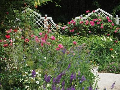 オーナーのケイ山田さんがデザインした英国式のガーデン。バラと宿根草が織り成す景観が美しい