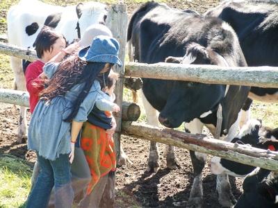 長門牧場ではウシやウマ、アルパカなどの動物に触れ合える