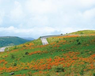 絶景ポイントが満載!日本屈指の高原ルート「ビーナスライン」で初夏のドライブ