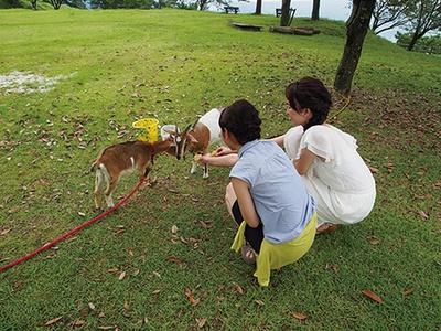 道の駅 霧島では、ヤギやウサギとも無料で触れ合うことができる