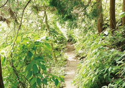 ブナ、イヌブナ、シイ、カシなど、たくさんの植物に出合える2号路(霞台ループコース)