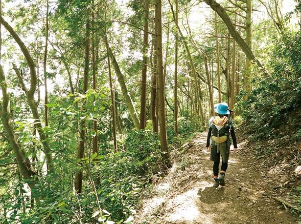 3号路(かつら林コース)は、ゆったり静かに自然を満喫できる