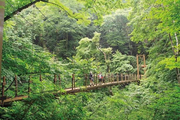 ちょっぴりスリルを味わいたい人は、高尾山唯一のつり橋がある4号路(吊り橋コース)がおすすめ