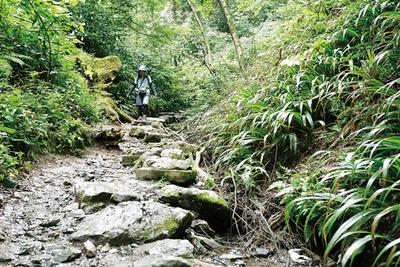 ケーブルカー・清滝駅の沢沿いを登っていく6号路(琵琶滝コース)。川のせせらぎに癒されよう