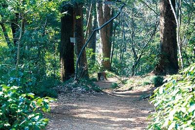 いろはの森コースは、知る人ぞ知る穴場ルート。樹木に付いている、いろは48文字の名札を探しながら歩いてみよう