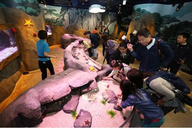 【写真を見る】「ロックプール」ゾーンでは、岩を模した水槽でヒトデやナマコにタッチ