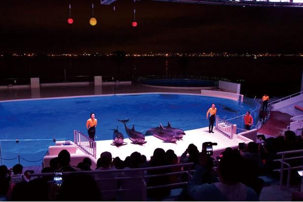 夜の博多湾をバックに、イルカたちが華麗なジャンプを披露する「夜のイルカショー」
