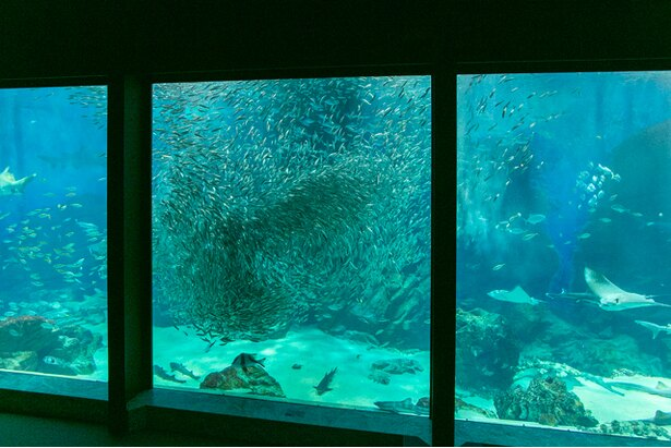 水槽の中を泳ぐイワシの大群は一つの芸術作品のようだ