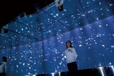【写真を見る】ミズクラゲの水槽の周りは鏡張り/海遊館 海月銀河