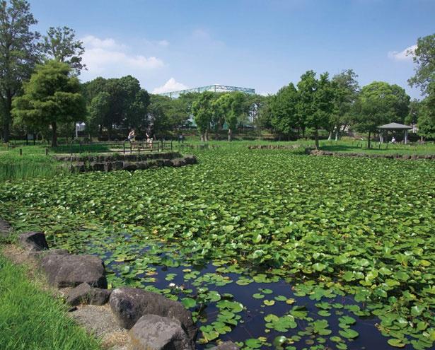 【写真を見る】都内で唯一水郷の景観を持つ水元公園