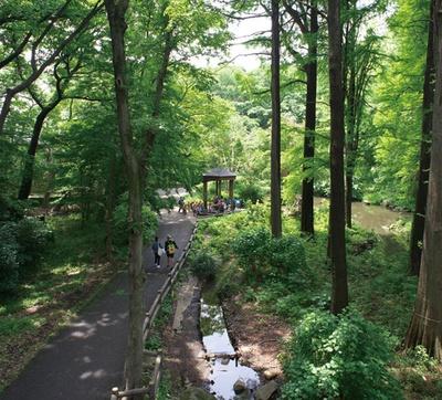 巨樹が立ち並ぶ、林試の森公園