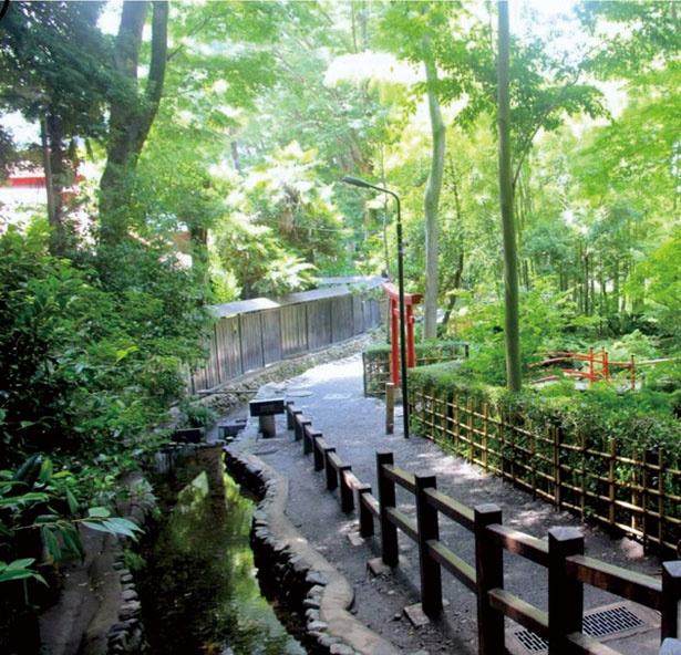 名水百選に選ばれた尾張徳川家ゆかりの地である、お鷹の道・真姿の池湧水群
