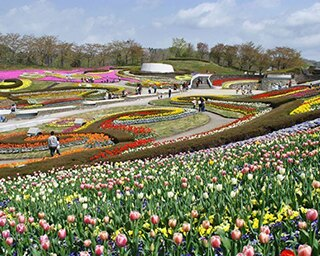 年間を通して色とりどりの花が咲く彩のひろば