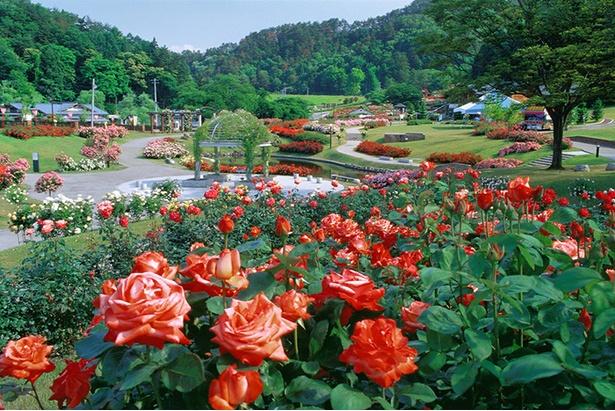 世界各国の2万株のバラを見ることができる