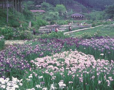【写真を見る】春から夏にかけて花のメドレーが楽しめる「花の郷 滝谷花しょうぶ園」