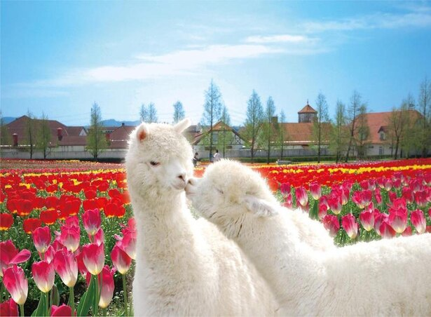 【写真を見る】ドイツの田舎町と農業をテーマにした農業公園「滋賀農業公園 ブルーメの丘」