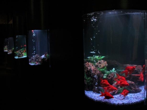 常設金魚ミュージアム。観賞するだけでなく、金魚をコンセプトにプロジェクションマッピングや万華鏡などを用いた5つのアート空間がある