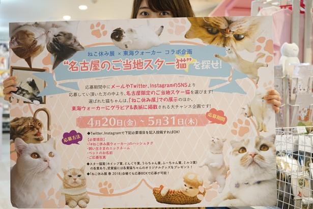 東海ウォーカーとのコラボ企画も開催中!愛猫が表紙を飾るかも!?