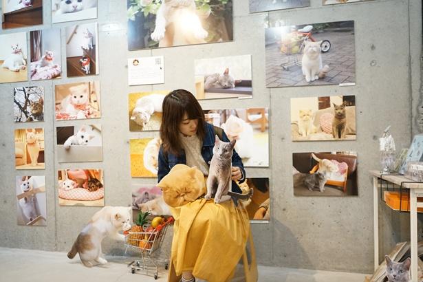 会場には、ネコの切り抜きパネルを使って写真が撮れるフォトスポットも。本当にネコがいるような写真が撮れちゃいますよ♪