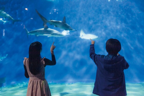 「あのサメなんていうんだろ?」「わかんないけどかわい~!」カメラも忘れてサメに夢中になる大地さんと七瀬さんの図