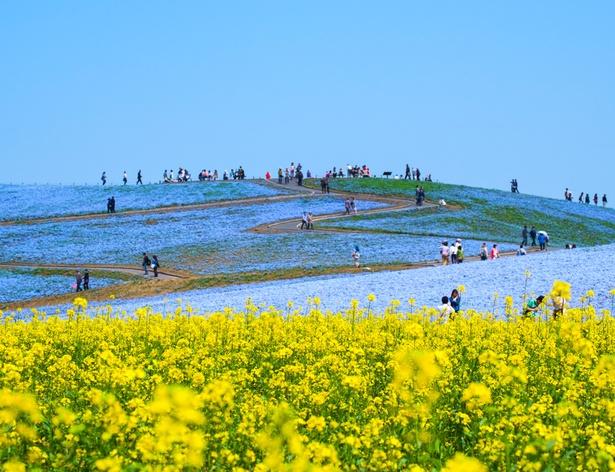 サイクリングコー スや観覧車などもある国営ひたち海浜公園