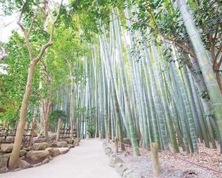 鎌倉に行こう! 鎌倉のすがすがしい境内で深呼吸!  朝からお寺巡りを楽しむ