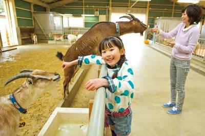 【写真を見る】一生懸命エサのおねだりをしてくる、愛らしいヤギの姿/奈良県営 うだ・アニマルパーク