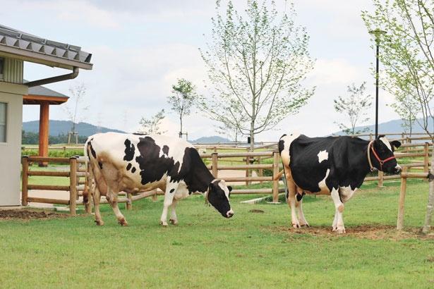 「牛舎」では乳搾り体験ができると人気/奈良県営 うだ・アニマルパーク