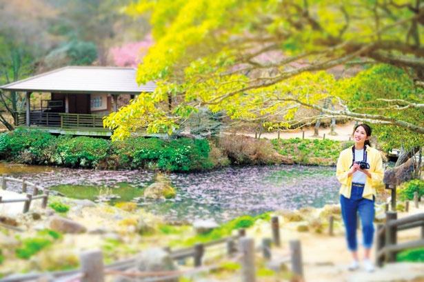 北海道南部に相当する気候の園内/六甲高山植物園