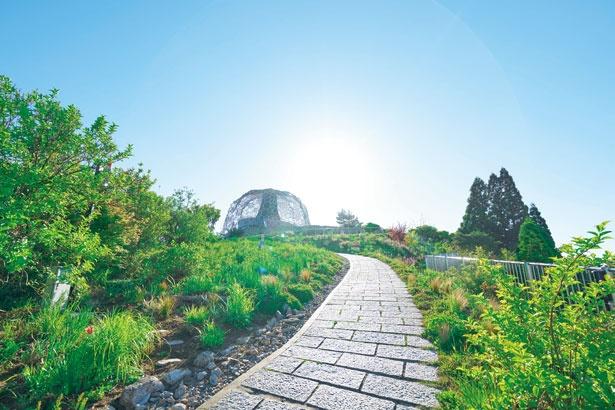 草花、建物(六甲枝垂れ)、青空、太陽を組み合わせて撮るとキレイに撮れる/六甲ガーデンテラス