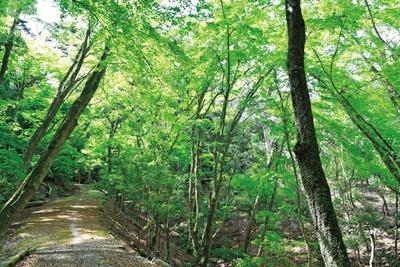 標高498m、総面積約250万平方メートルもの広さを誇る春日山原始林/春日山遊歩道