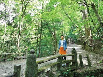 いい天気の日に狙いたいこの一枚/春日山遊歩道