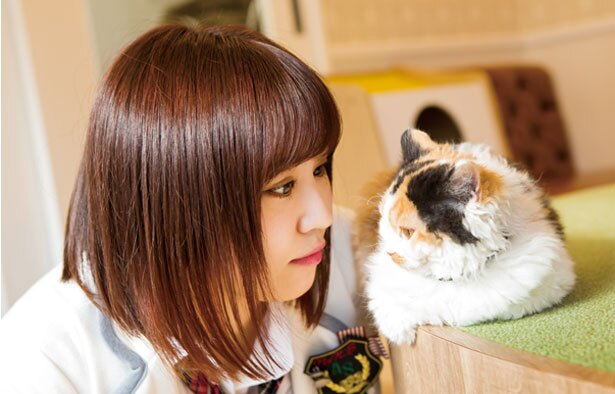【写真を見る】なるの推しニャン「ふぶきちゃん(セルカークレックス)」/猫カフェホテル ニャンケシェン