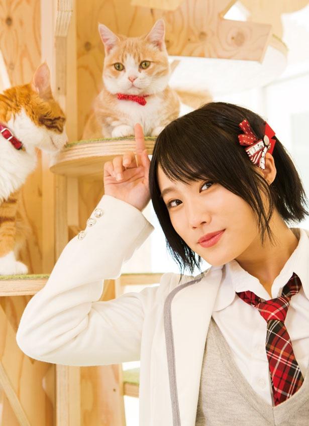 イケメンのタカラくんにひと目ぼれ/猫カフェホテル ニャンケシェン