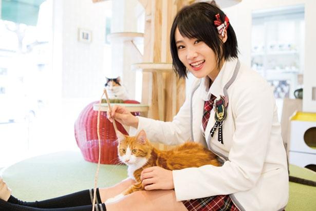 メインクーンのタモリ(通称タモさん)/猫カフェホテル ニャンケシェン