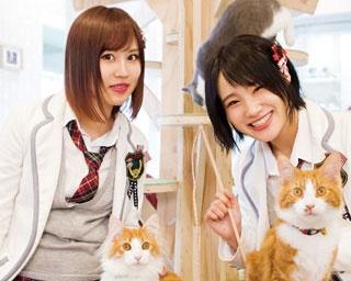 モフモフかわいい猫と一緒/猫カフェホテル ニャンケシェン