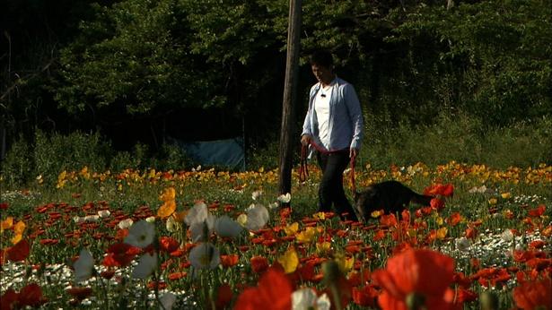 一茂がお花畑を散歩