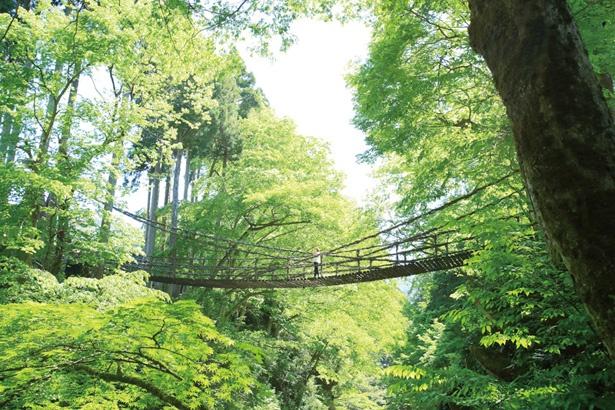 まるでつり橋をおおうように樹木が生い茂り、木漏れ陽が心地よい。森林浴にも打ってつけのスポットだ