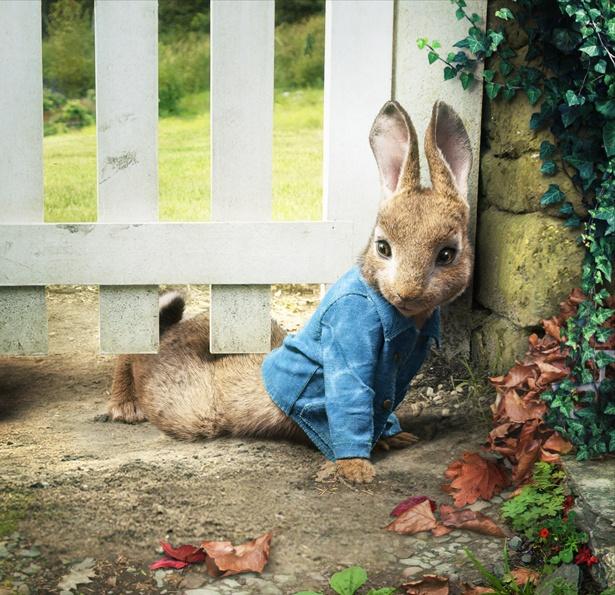 【写真を見る】モフモフの毛並み、つぶらな瞳、あの人気者ウサギが超カワイイ!