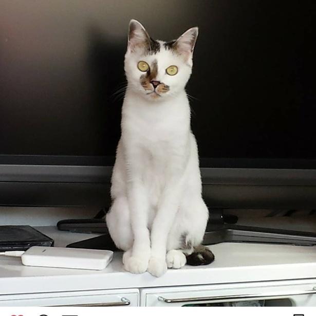 めるさん@boycat_mam(マリ)