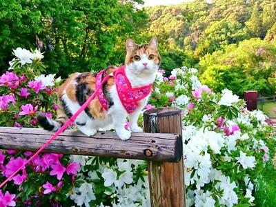 楓@love_cats.k_h(楓&北都&星)