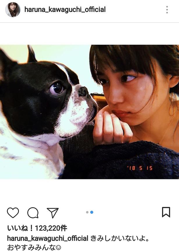 【写真を見る】これはラブラブ! 愛しのアムちゃんとじ~っと見つめ合う川口春奈