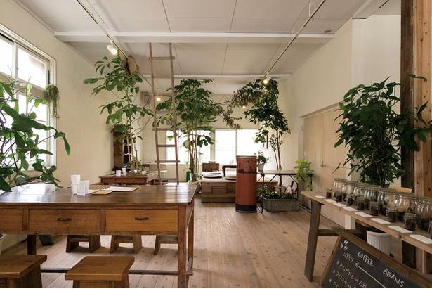 <珈琲焙煎屋 Petani coffee>天井まで伸びる観葉植物で彩られた店内。店奥にカフェスペースあり