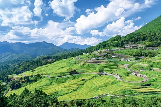 【写真を見る】昼間の風景はのどかそのもの。青空と緑のコントラストが美しい