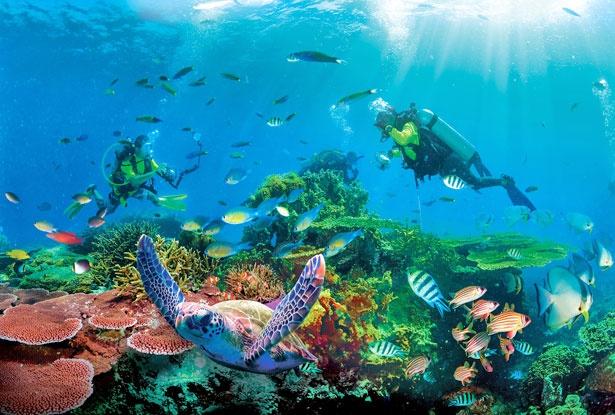ウミガメや様々な海の生き物と一緒に泳ぐ