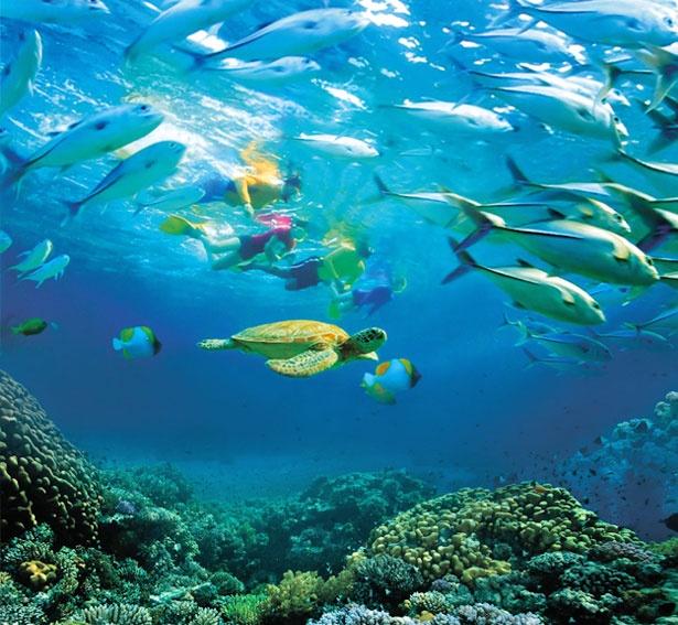 マレーシアの美しい海で、フォトジェニックな水中写真を撮影してみよう
