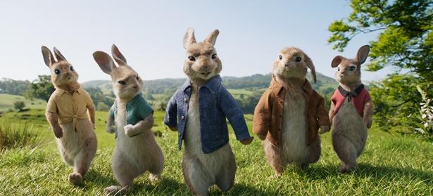【写真を見る】モフモフ感が可愛いピーターラビット率いるウサギたち。チャーミングだがみんな個性的!