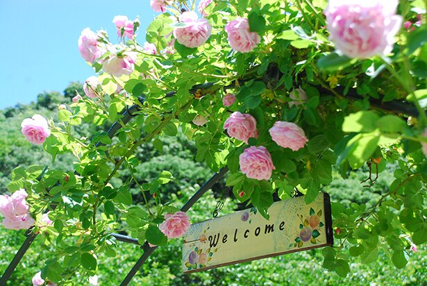 バラの花がお出迎え