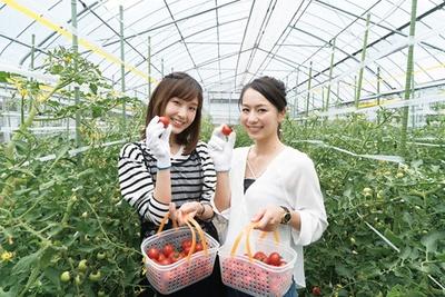 【写真を見る】夏に行きたいフルーツトマトの味覚狩り!