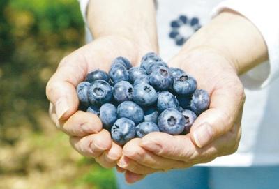 化学農薬や除草剤を使わず育てた果実は、安心して味わえる